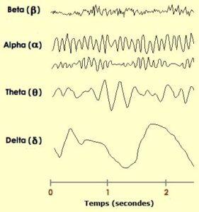 ondes cerebrales